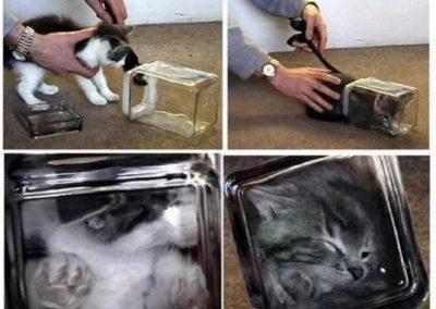 Burgemeester van Amersfoort verbiedt katten omdat dochter allergisch is